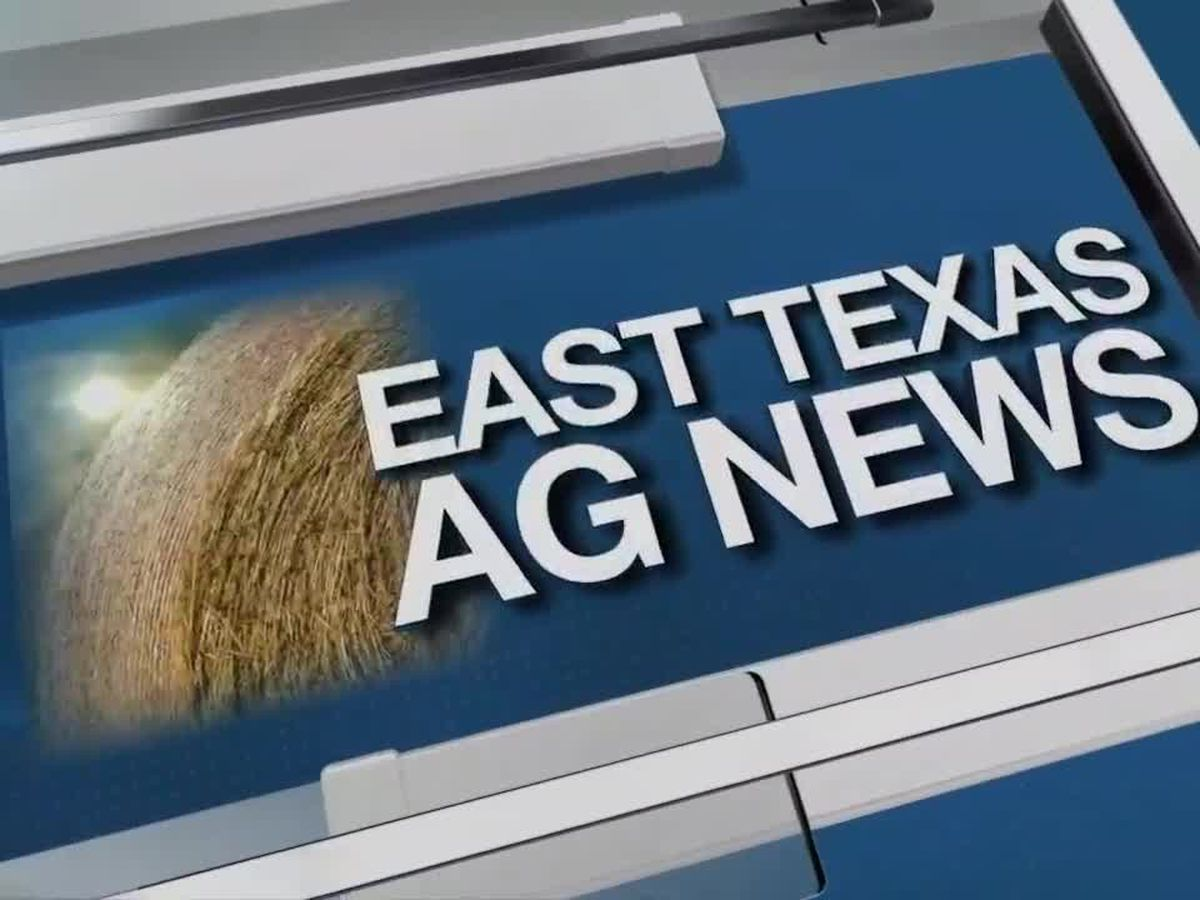 East Texas Ag News: Cattle prices firm compared to last week