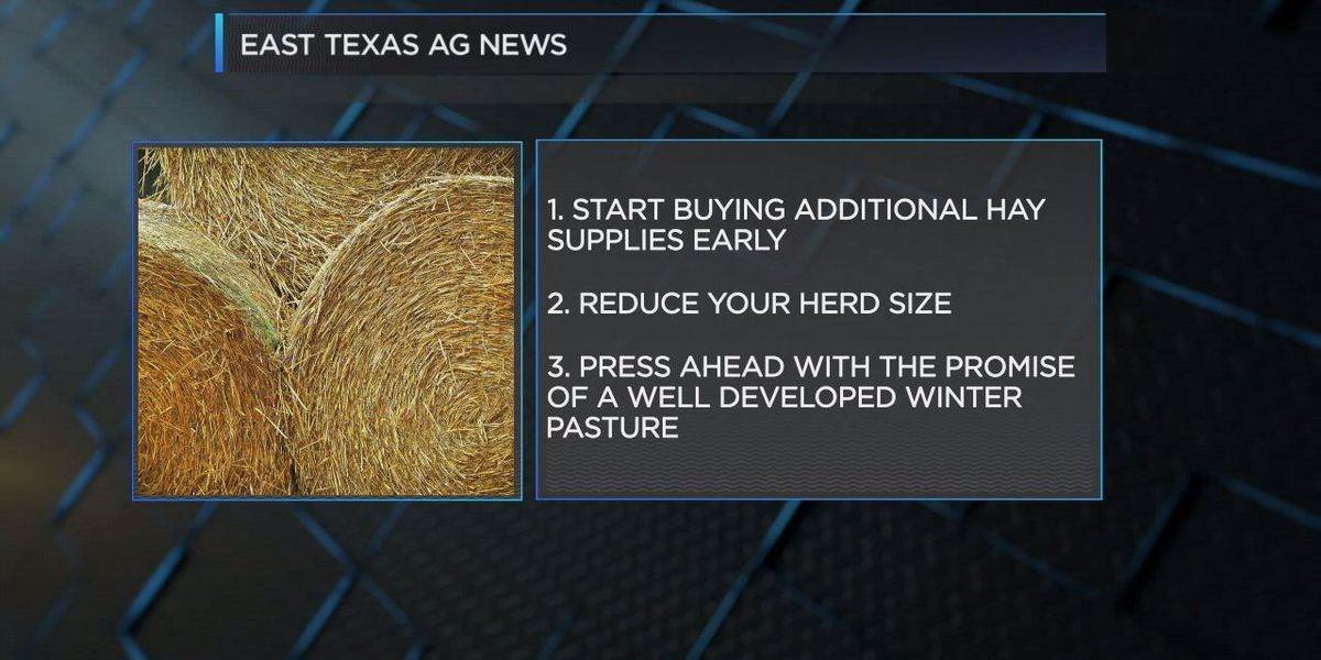 East Texas Ag News: Drought concern of hay producers