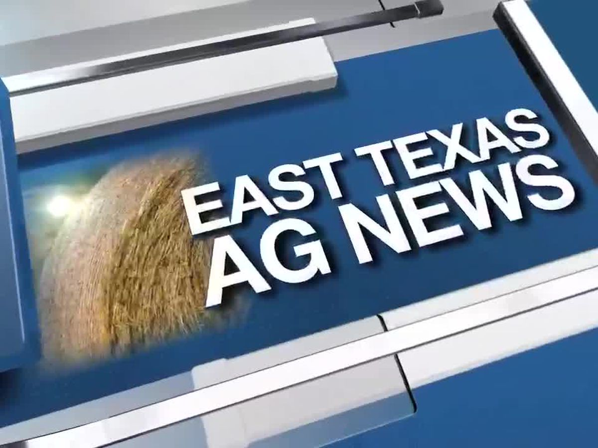 East Texas Ag News: How to deter deer from your garden