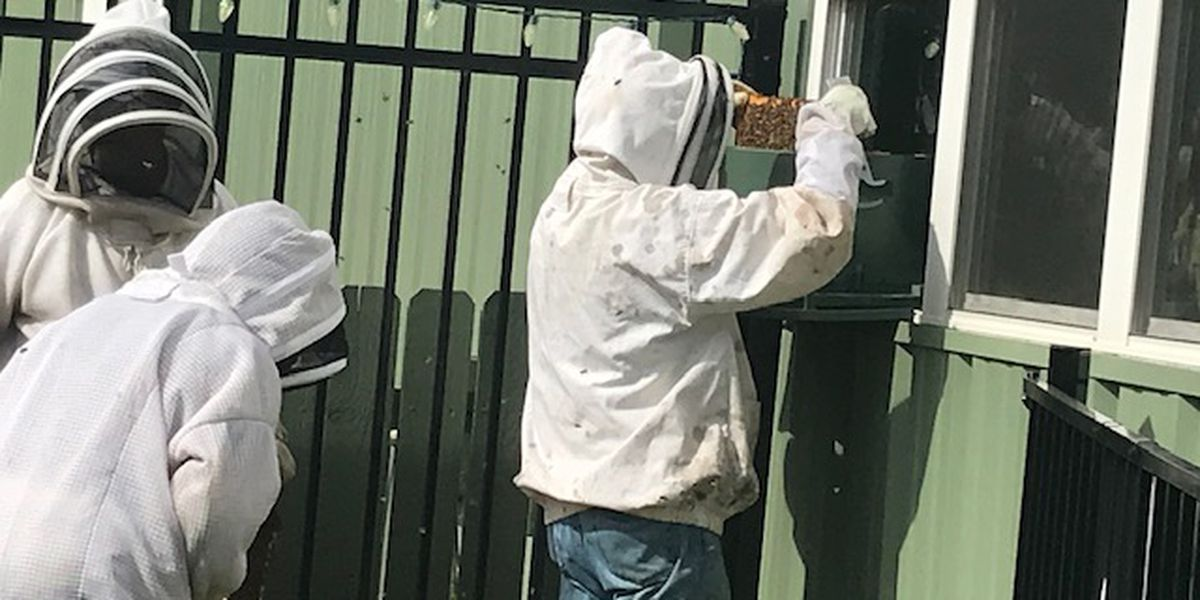 Window-mounted beehive abuzz at Longview Arboretum and Nature Center