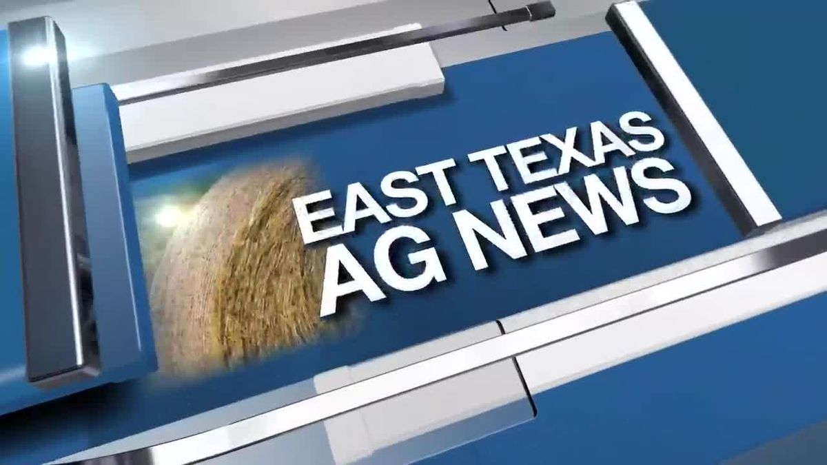 East Texas Ag News: This week's hay prices remain steady