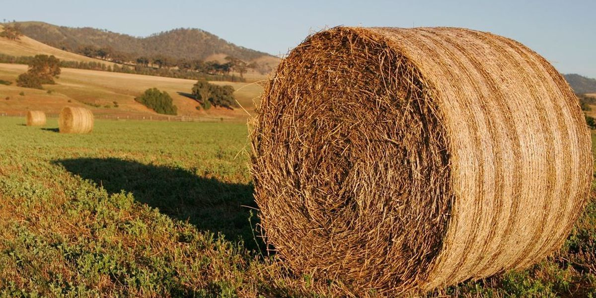 Planning for a successful 2019 hay harvest