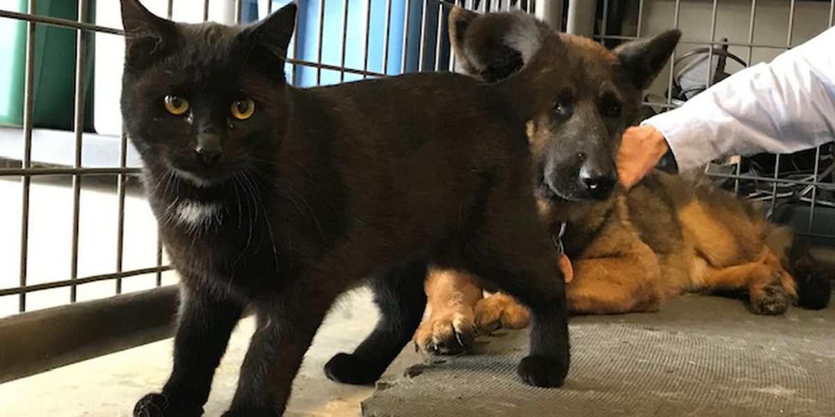 This dog and cat are best friends and they're looking for a new home