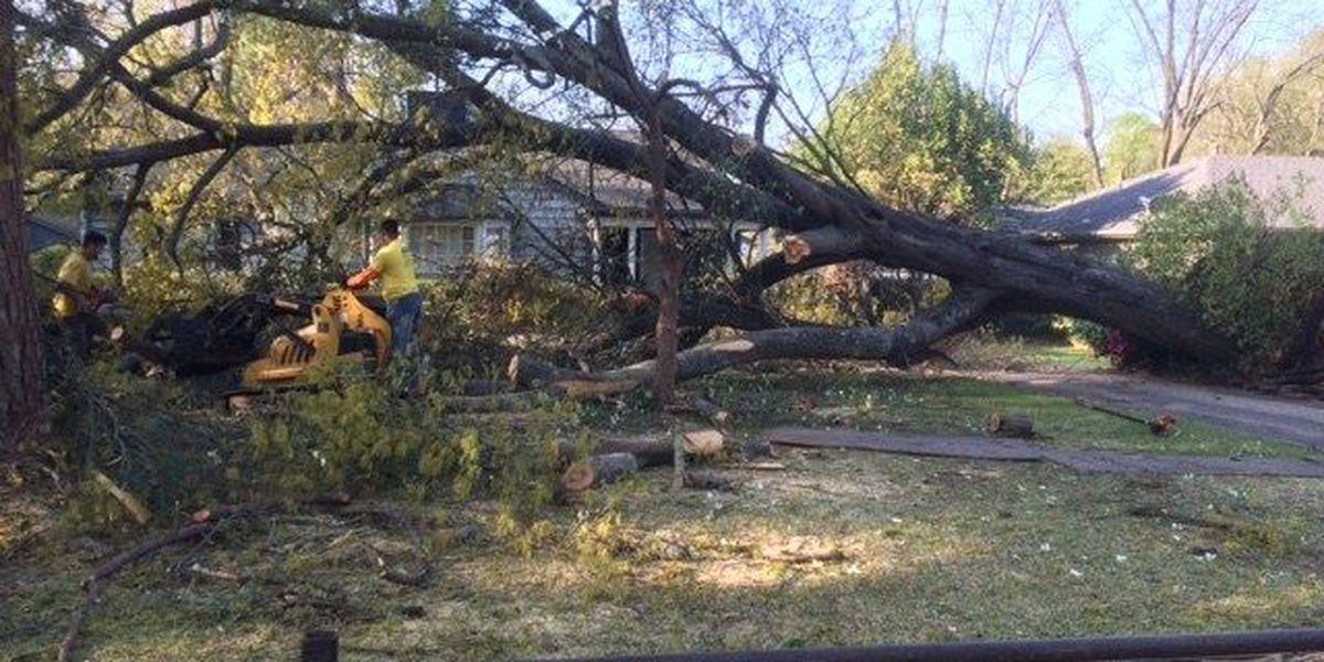 Tree falls in Longview, narrowly misses house