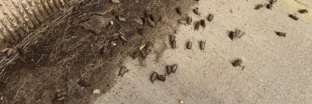 Texas Parks & Wildlife counting 1000s of bats dead under bridges following winter storm