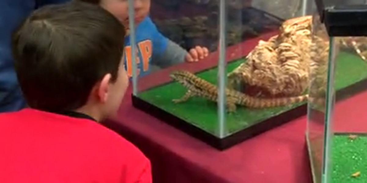 Reptile pet show in East Texas