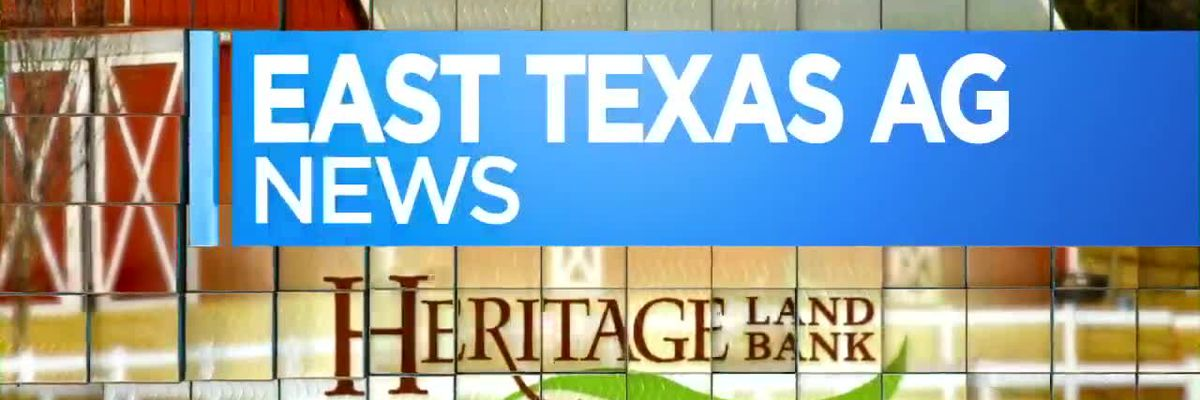 East Texas Ag News: Not too late to plant pansies