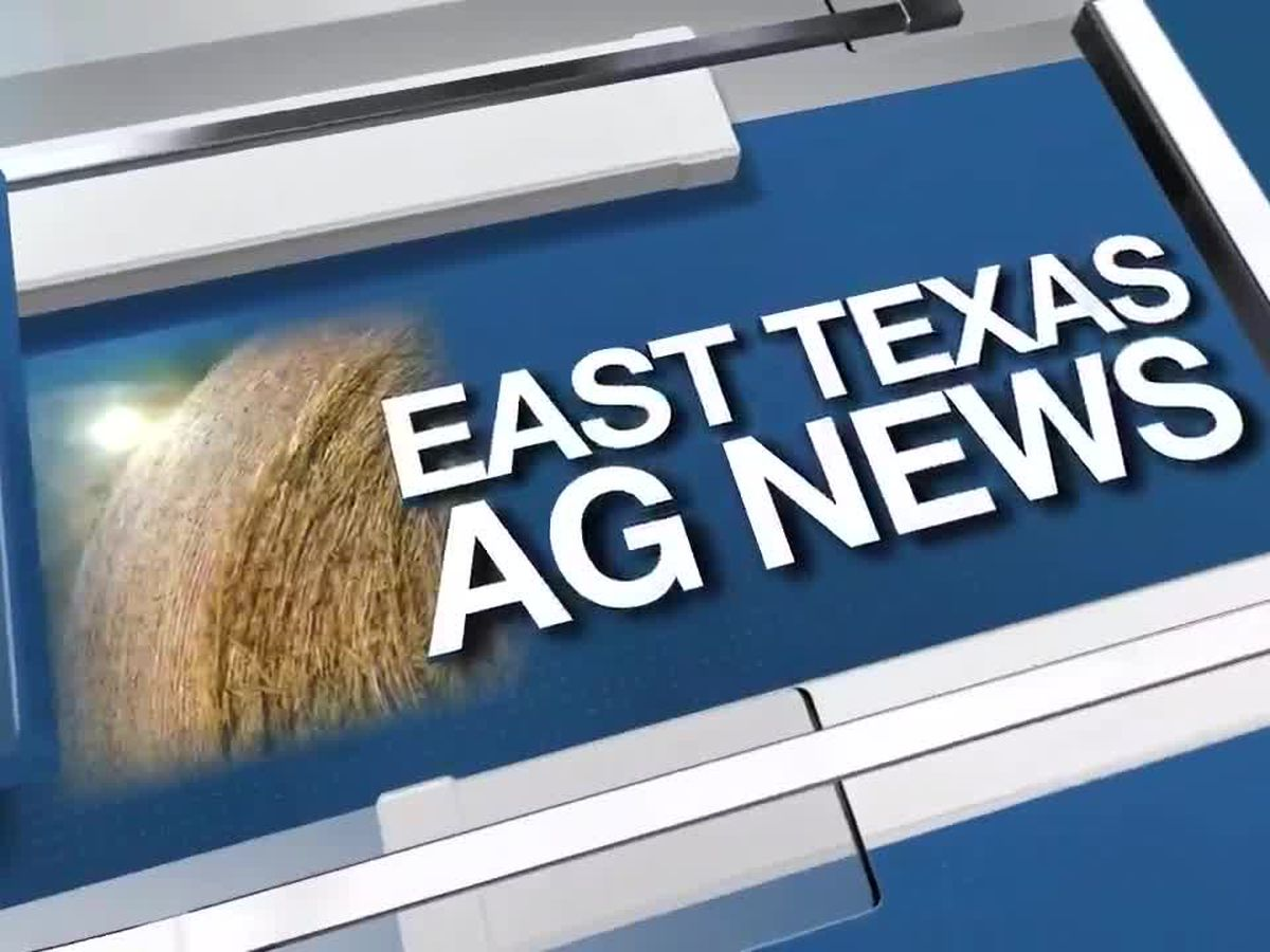 East Texas Ag News: It's time to stop automated irrigation on East Texas lawns