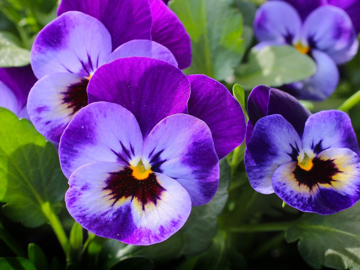 East Texas Ag News: Planting winter-hardy flowers