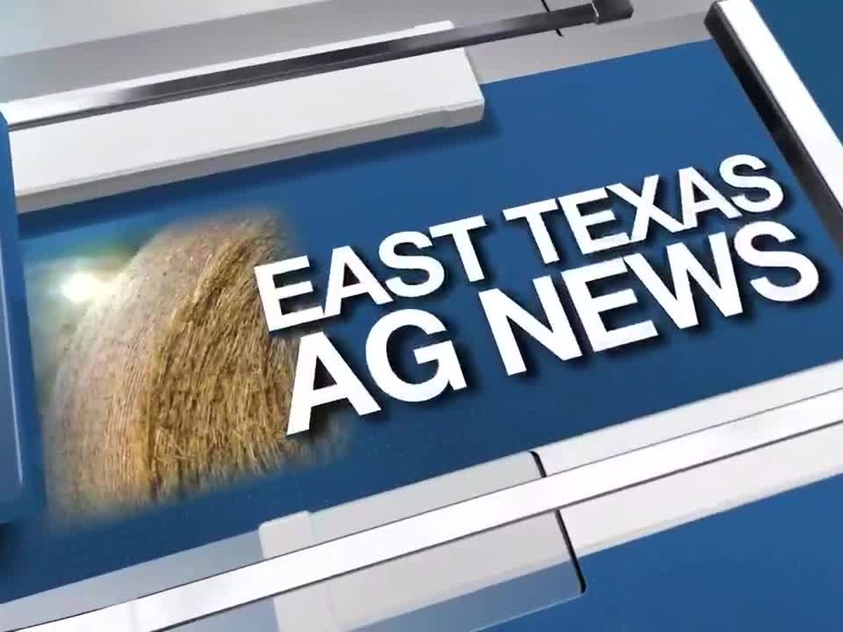 East Texas Ag News: The importance of testing hay quality