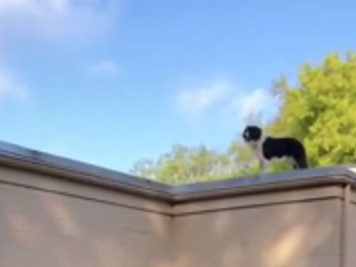 Firefighters attempt rescue of dog stuck on roof of roofing company