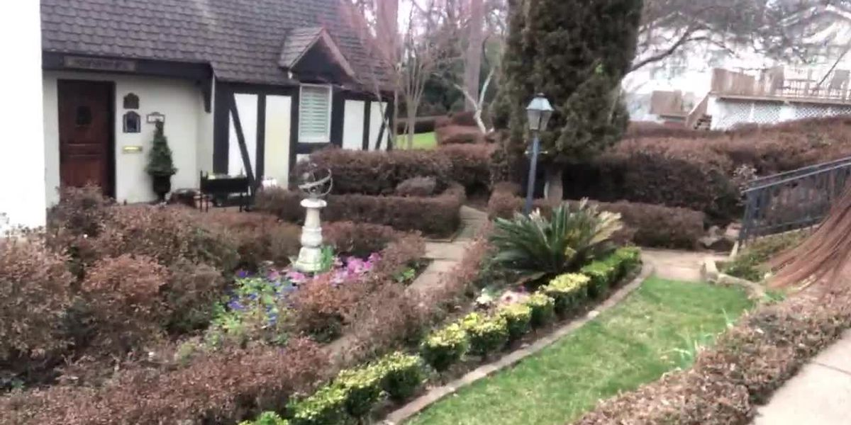 Annual Azalea & Spring Flower Trail still on despite some effects from cold