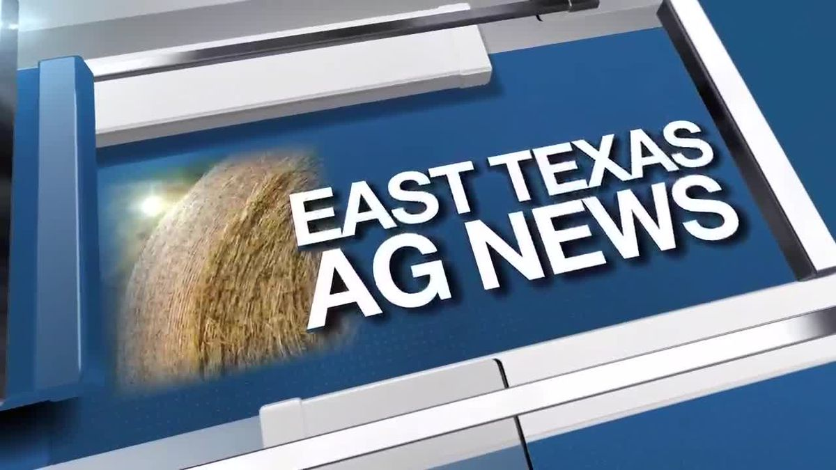 East Texas Ag News: Cattle prices steady to slightly higher this week