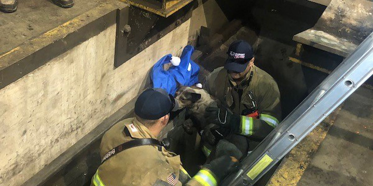 Mount Pleasant Animal Control searching for owner of dog who fell into 6-foot pit