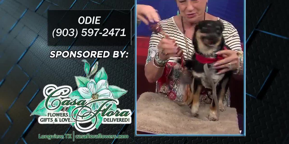 Pet Project: Odie