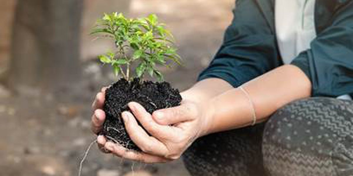 Arbor Day program set for April 30 in Marshall rescheduled