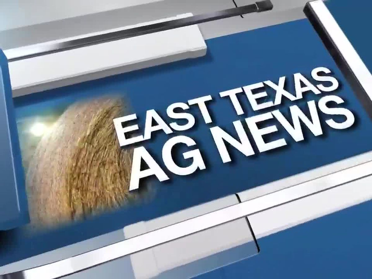East Texas Ag News: Tips on watering your landscaping in dry summer months