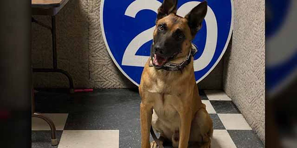 K9 deputy recovers firearm, pills, pot in traffic stop in Van Zandt County
