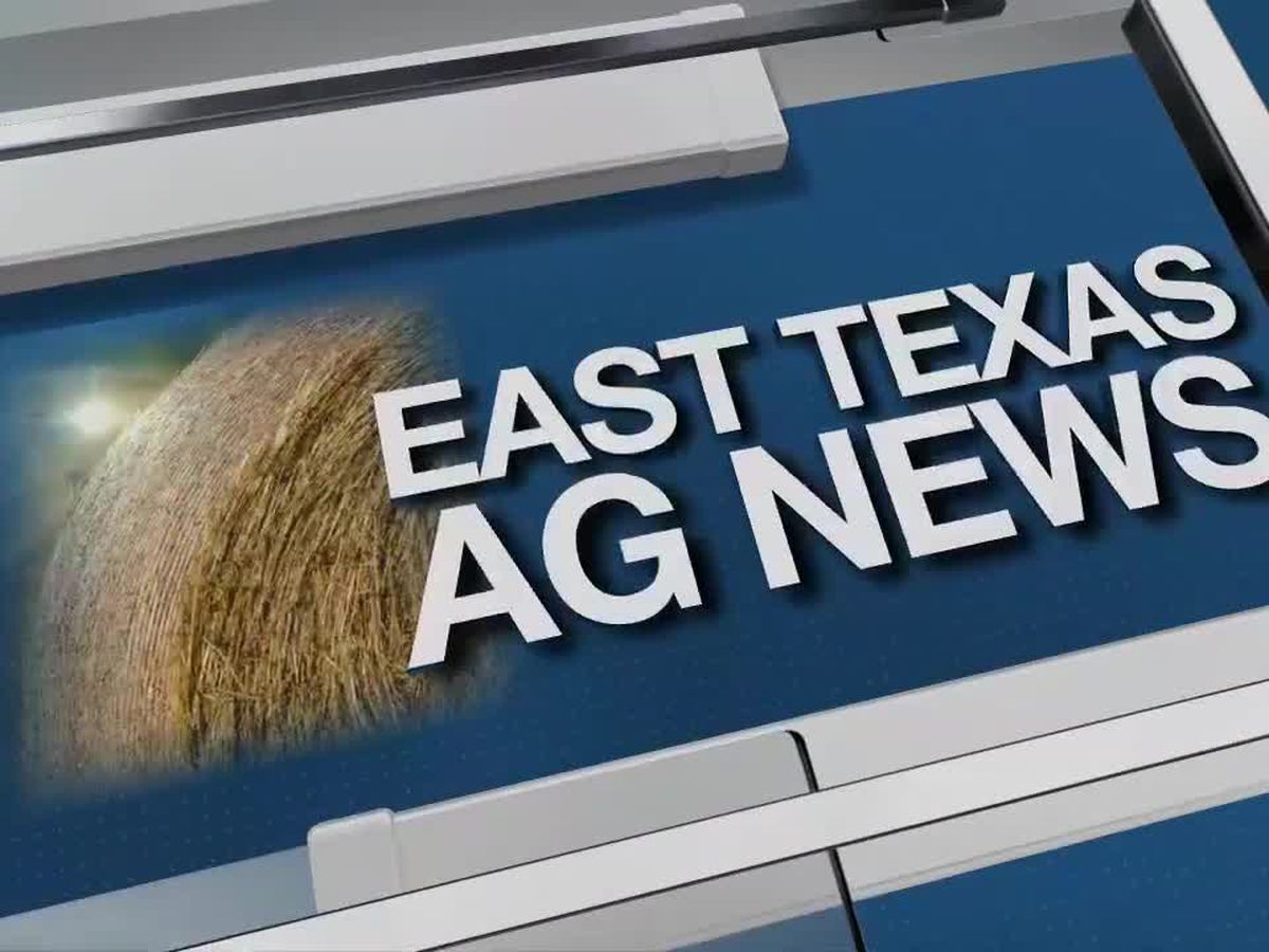 East Texas Ag News: Texas hay prices higher this week