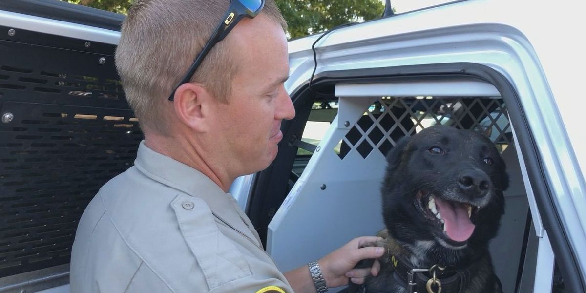 WEBXTRA: Prop 10 would change classification of law enforcement animals after retirement