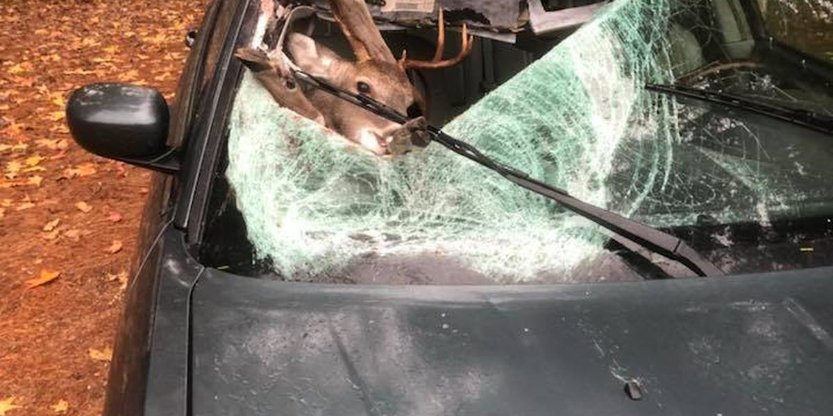 Deer crashes through driver's window, lands in front seat