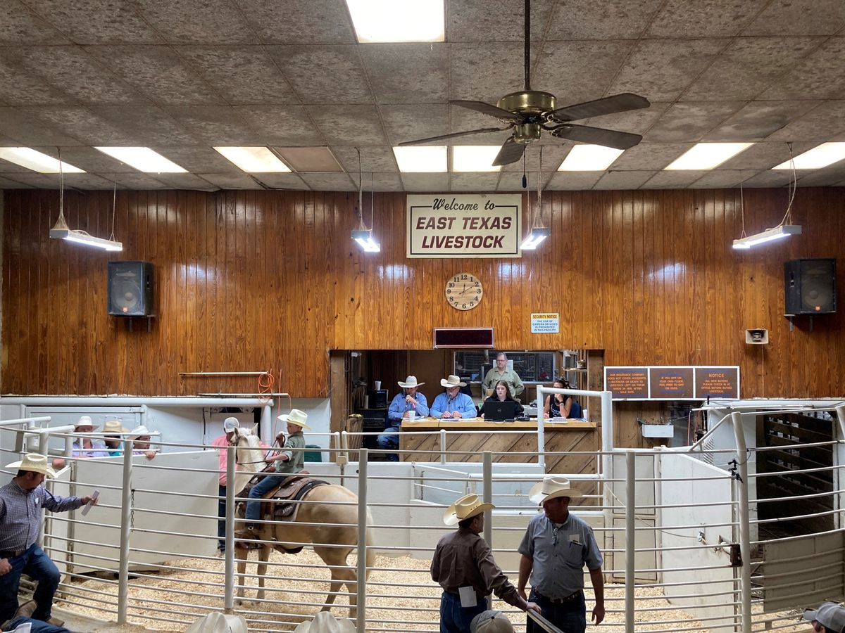 Queen of the South Replacement Sale held to boost cattle ranks