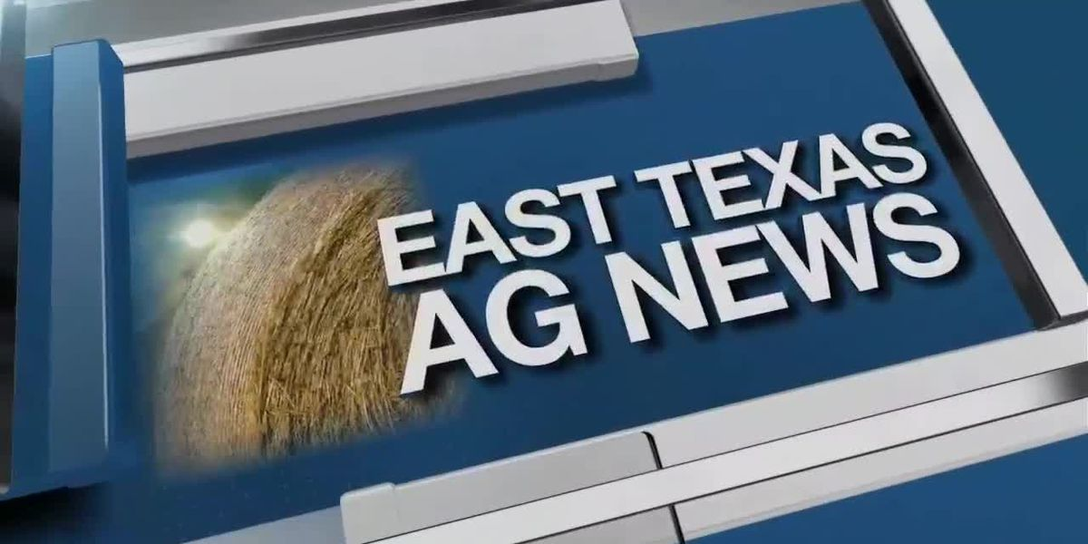 East Texas Ag News: This week's cattle prices mixed