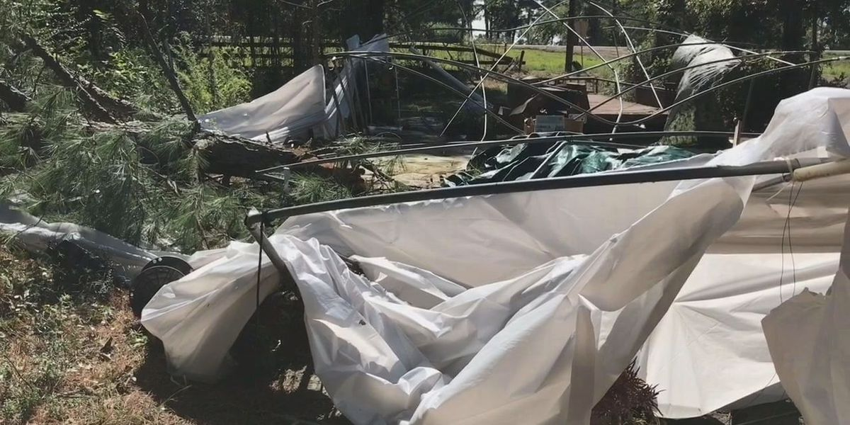 EF-0 tornado downs trees, damages property in Fairplay