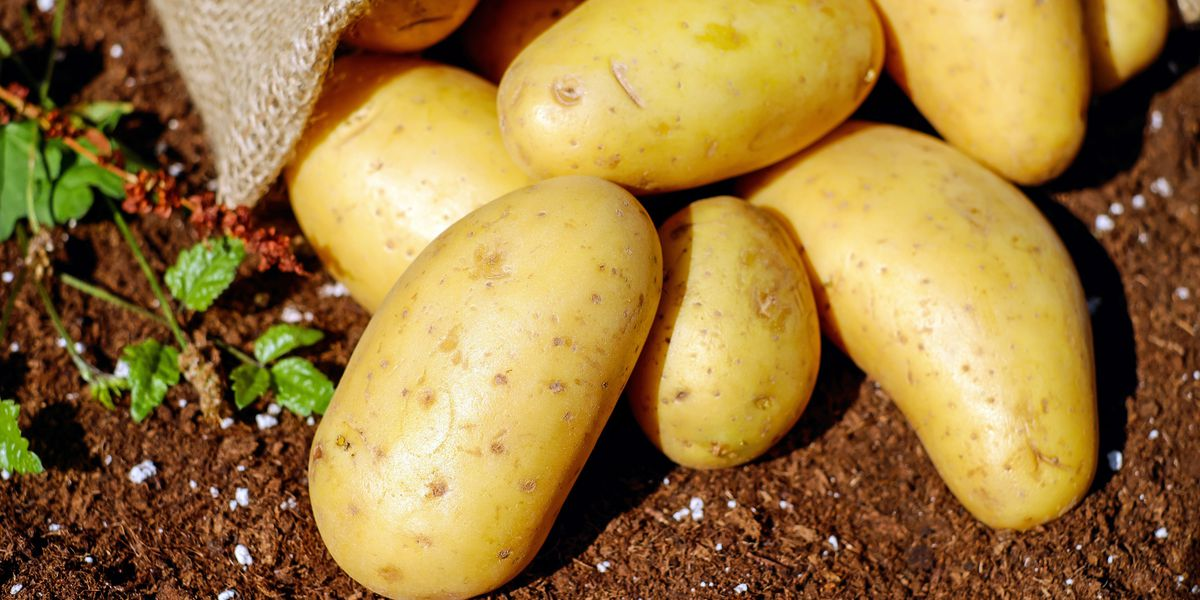 East Texas Ag News: Tips on planting potatoes in your spring garden