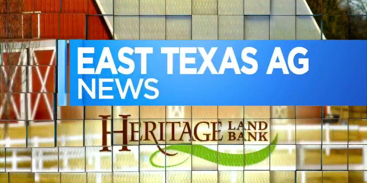 East Texas Ag News: Utilizing winter forage