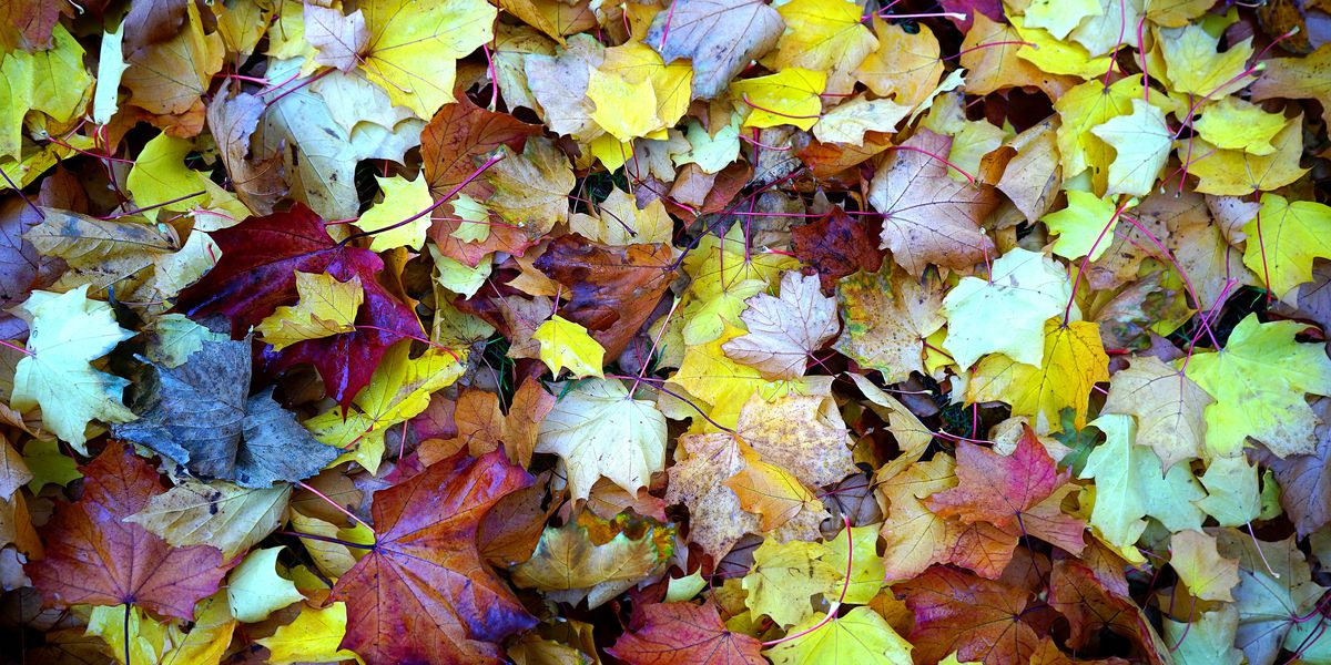 East Texas Ag News: What to do with all those leaves