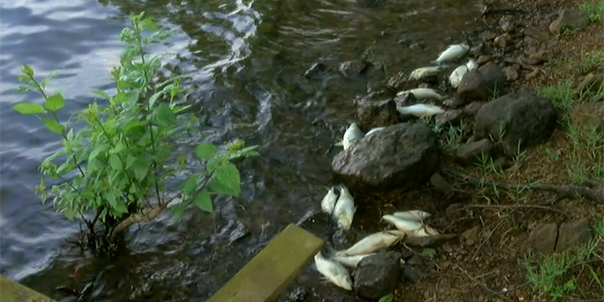 Hundreds of dead fish wash up on Lake Palestine shores