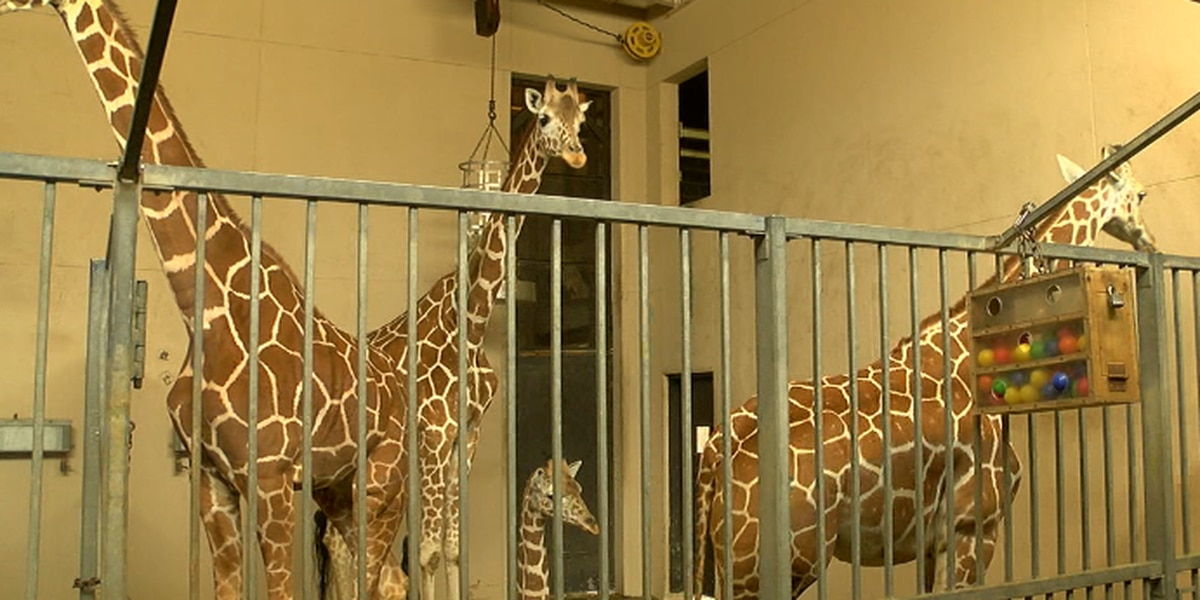 Caldwell Zoo keepers explain cold weather protocol as temperatures dip below freezing