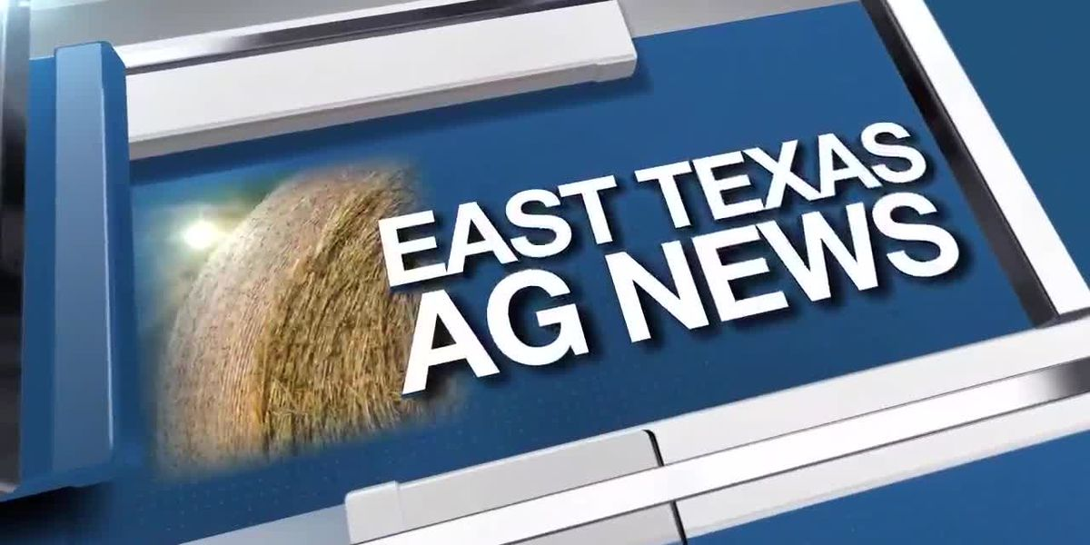 East Texas Ag News: Tips on keeping plants healthy while conserving water
