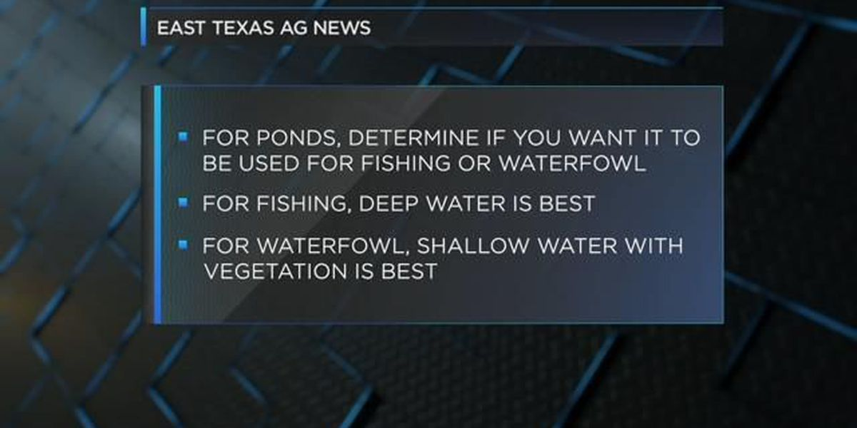 East Texas Ag News: Fish and waterfowl in farm ponds