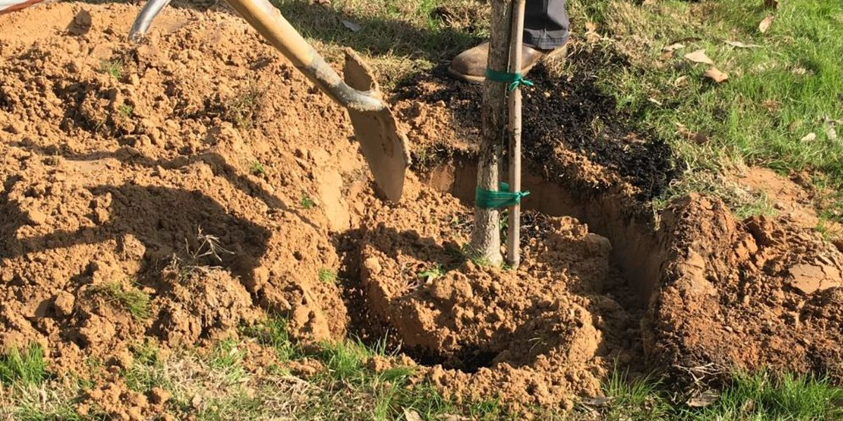 Tree planting at Tyler's Gassaway Park honors former council member who championed park renovations