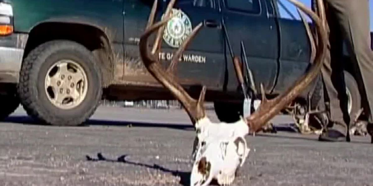 Game wardens watch for poaching, in and out of season