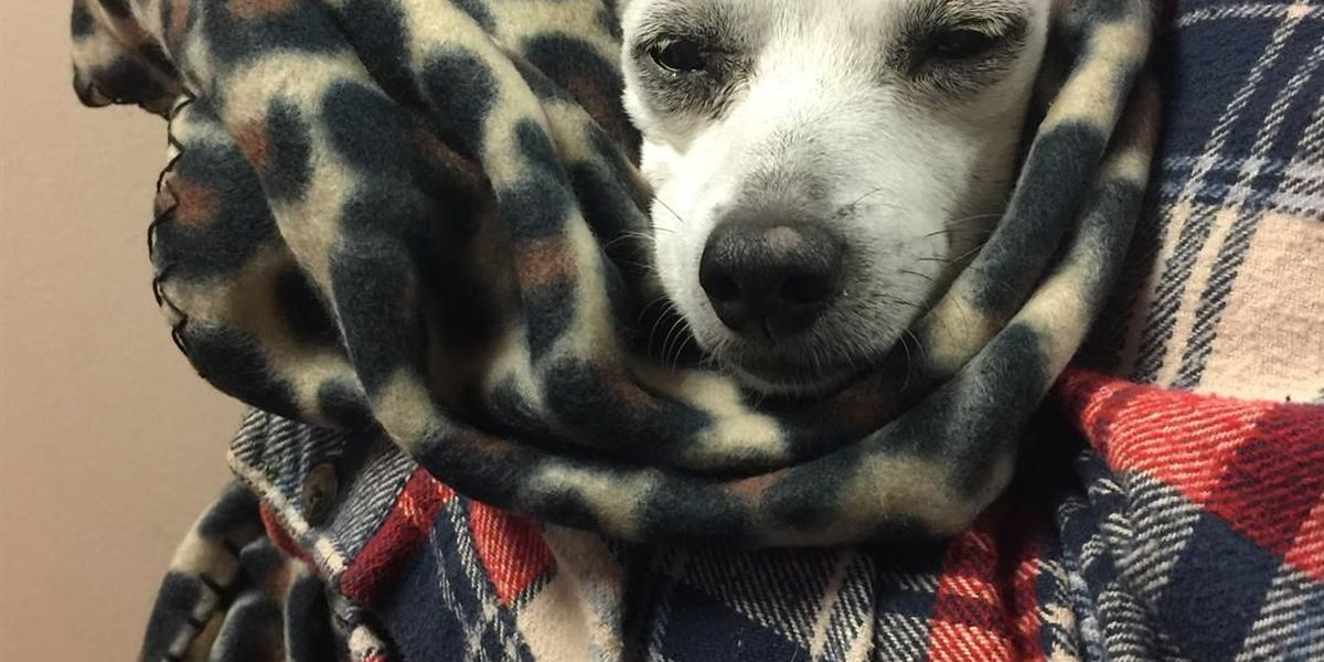 Thirteen-year-old dog survives coyote attack