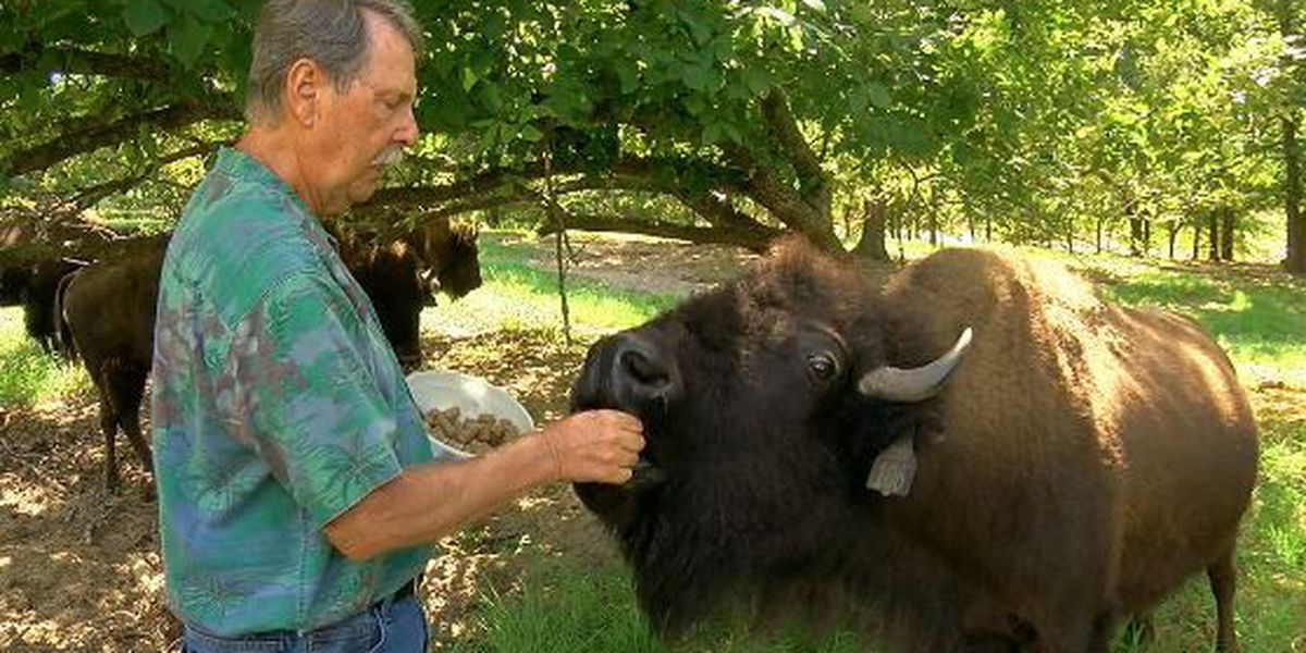 Home on the range: East Texas rancher talks about raising American Bison