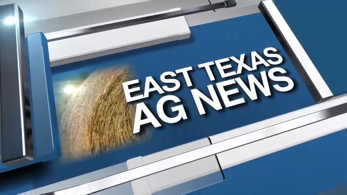East Texas Ag News: Update on peanut and hay crops