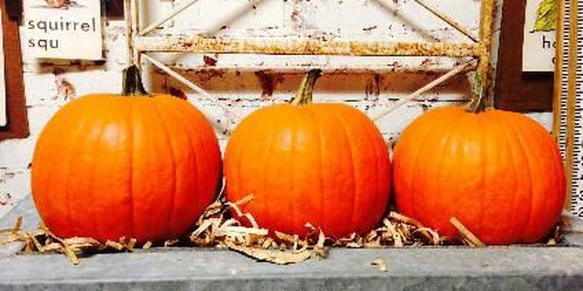 Fall recipes: Delicious ways to use pumpkin in your kitchen