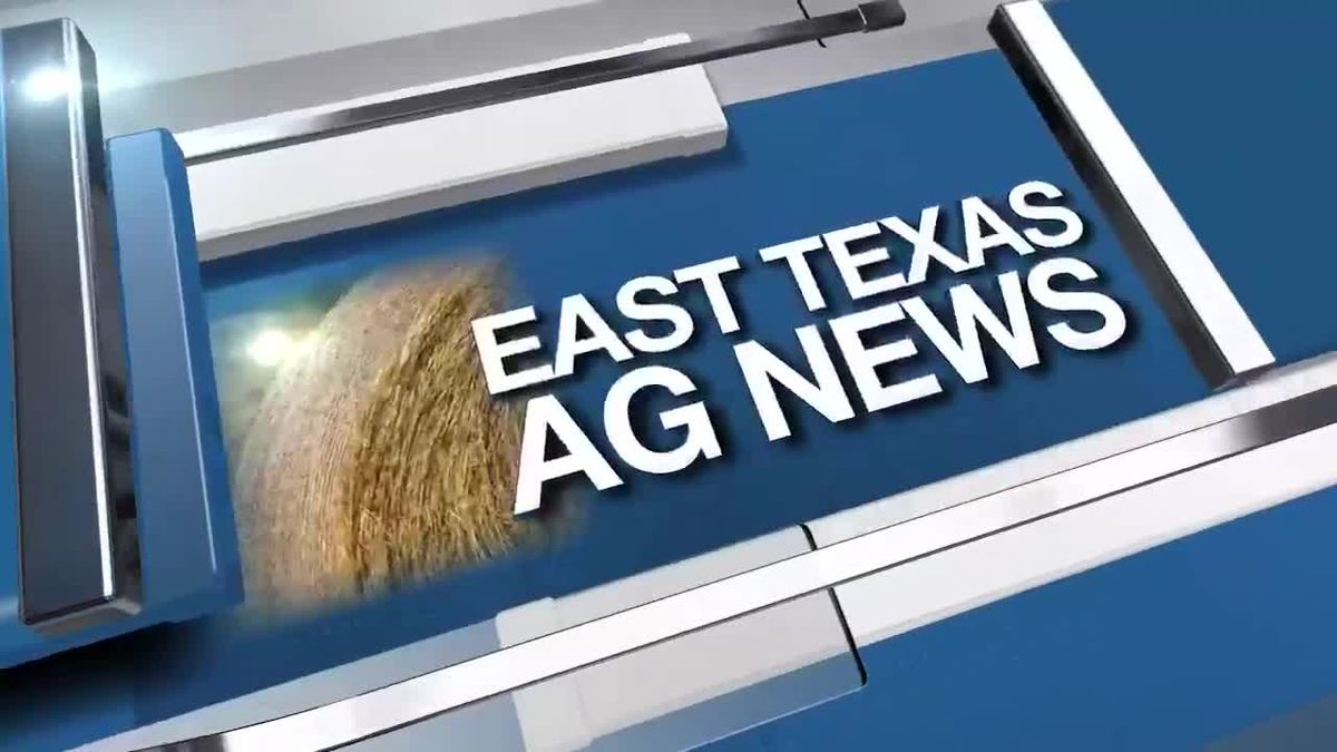 East Texas Ag News: This week's hay prices remain mostly steady