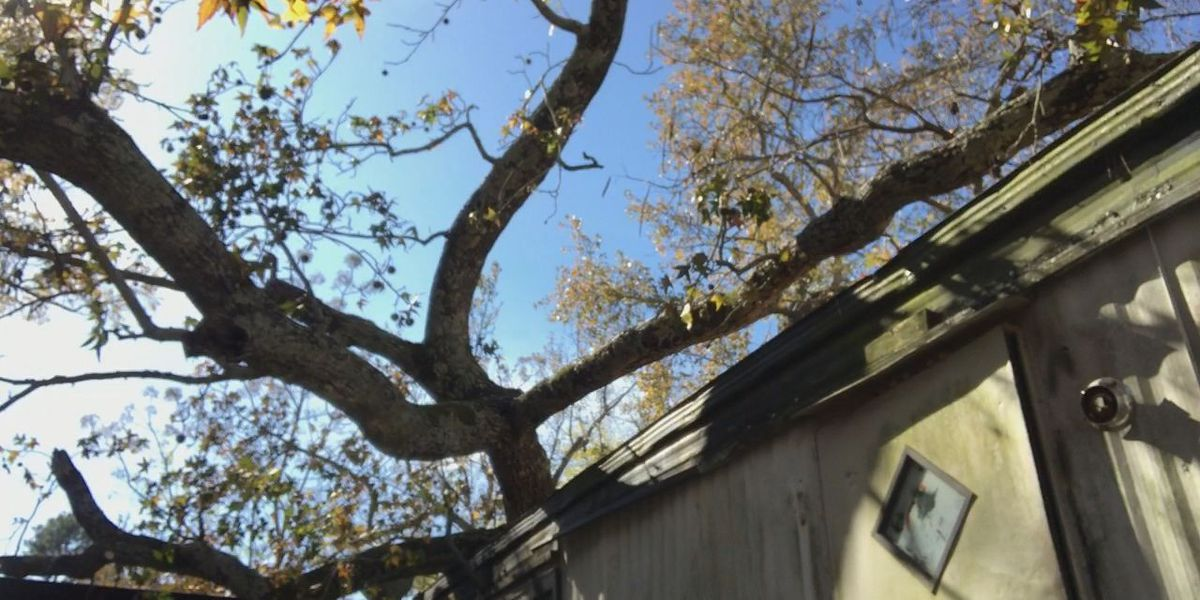 WEBXTRA: Tree falls on mobile home in Rusk County