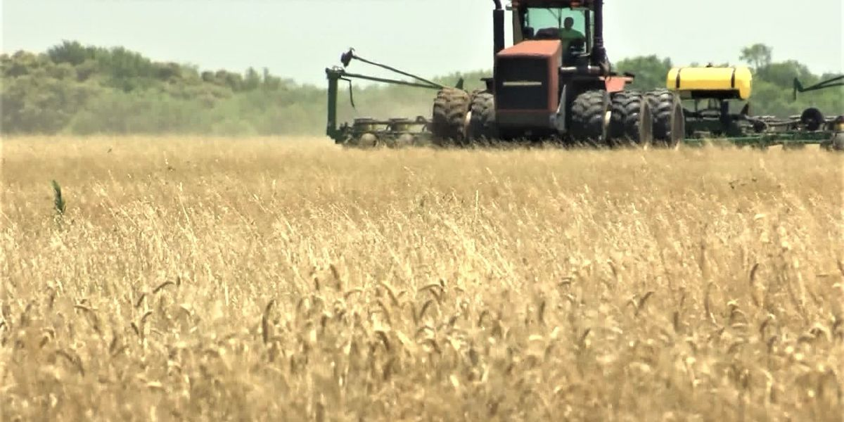 Possible spring drought in Panhandle could cause economic concern for wheat production