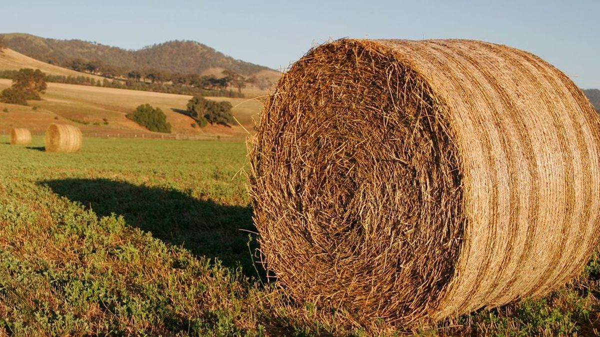 East Texas Ag News: Tips For Storing Hay