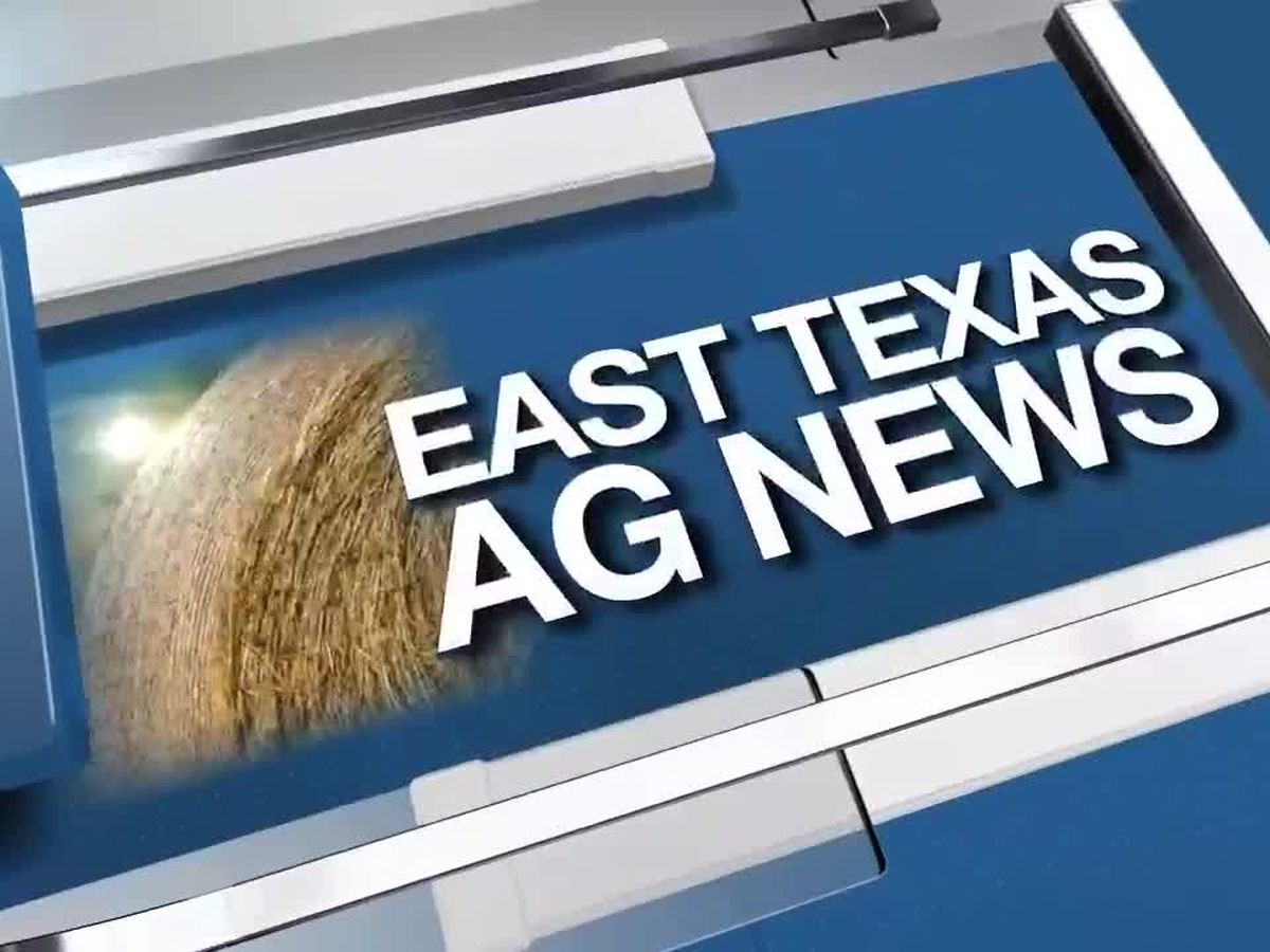 East Texas Ag News: Hay trades steady to firm across Texas